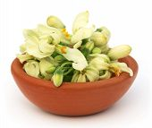 stock photo of oleifera  - Edible moringa flower on a brown bowl over white backgrokund - JPG
