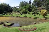 stock photo of royal botanic gardens  - Lake and trees in royal botanical garden Peradeniya Sri Lanka - JPG