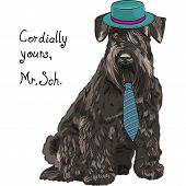 image of schnauzer  - hipster dog Schnauzer breed in a blue hat and tie - JPG