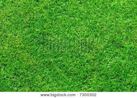 Fresh Lawn Grass