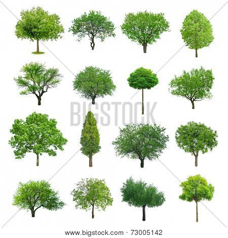 different tree set isolated on white