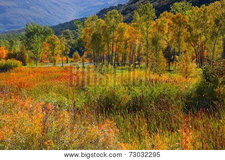 Aspen and cottonwood trees in Colorado, Early autumn time
