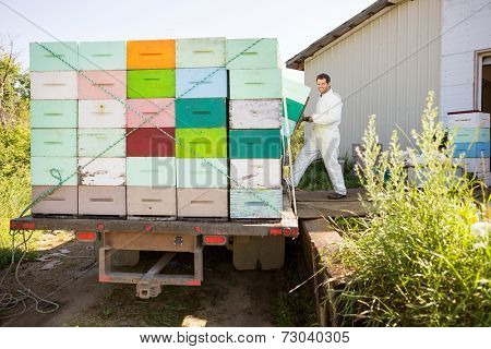 Full length of young male beekeeper loading honeycomb crates in truck