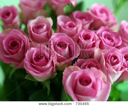 Bunch of a pink roses