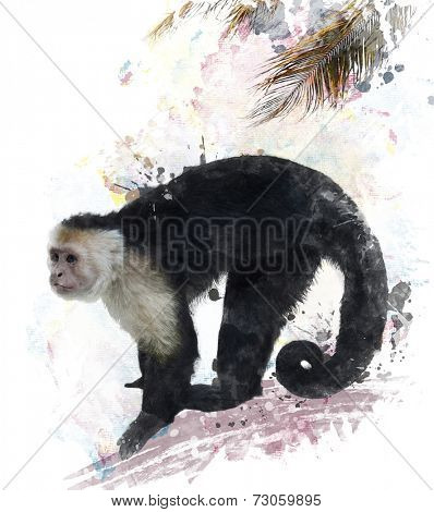 Watercolor Digital Painting Of White Throated Capuchin Monkey