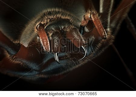 Fangs of hairy spider close-up (3D artwork)