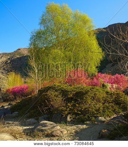 blooming rhododendron in siberian mountains