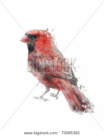 Watercolor Digital Painting Of Northern Cardinal (Cardinalis)
