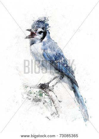 Watercolor Digital Painting Of Blue Jay Bird
