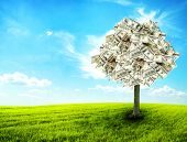 stock photo of prosperity sign  - Money tree growing in the middle of green meadow  - JPG