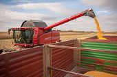 image of harvest  - The harvester filling the corn tank on the field - JPG