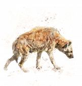 picture of hyenas  - Watercolor Digital Painting Of Spotted Hyena - JPG