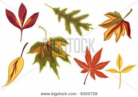 Various autumn fall leaves