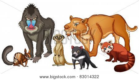 Illustration of many kind of animals