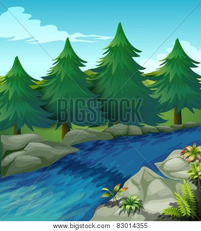 Illustration of a river with pine trees alongside