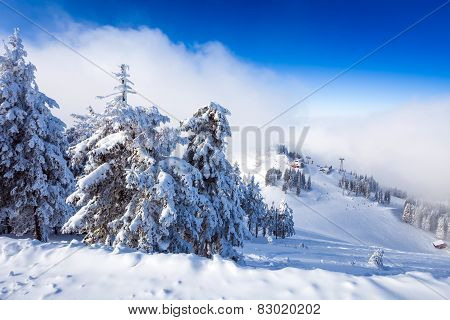 Pine Forest And Ski Slopes Covered In Snow On Winter Season