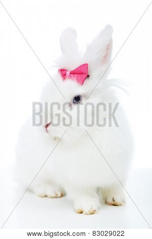 Cute white rabbit with pink bow sitting - isolated
