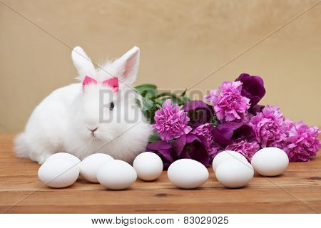 Spring symbols - white bunny waiting for easter with seasonal flowers- shallow depth of field