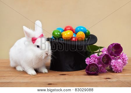 Easter magic with bunny guarding colorful eggs in magician hat and spring flowers- shallow depth of field