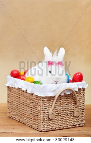 Cute easter bunny with colorful eggs sitting in a basket- shallow depth of field