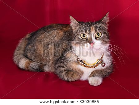 Tricolor Striped Cat Lying On Red
