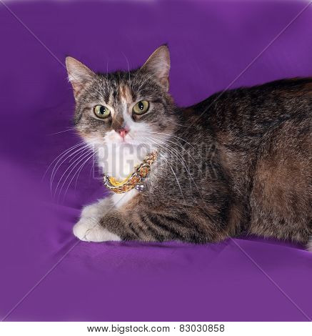 Tricolor Striped Cat Lying On Lilac