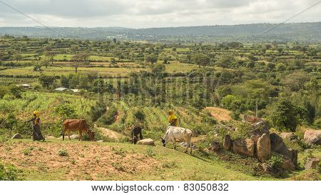 Pastoralists From The Harar Region