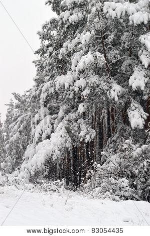 snowstorm钢琴曲谱子
