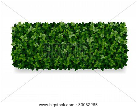Boxwood Decorative Fence