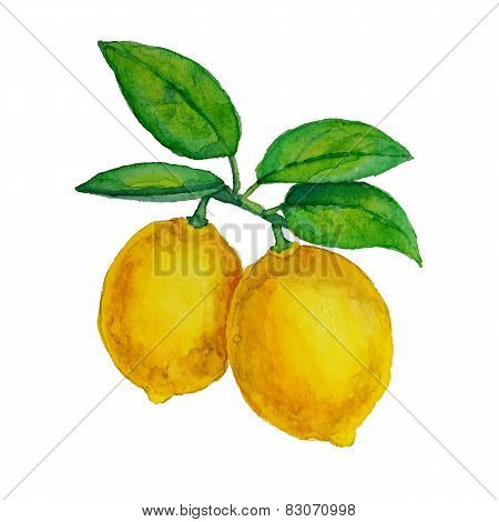 Watercolor lemons hanging on branch with leaves