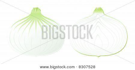 Vector Onion