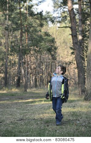 Spring In The Pine Forest Boy For Someone Watching.