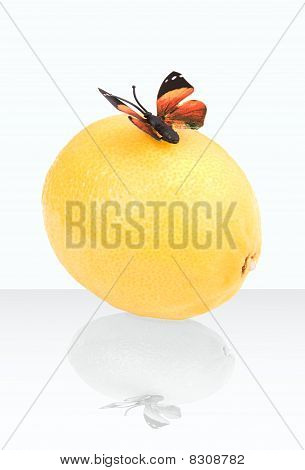 Butterfly On A Lemon