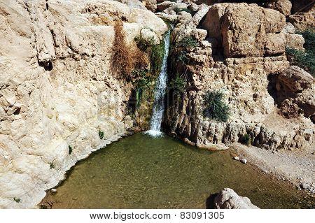 Ein Gedi Spring - Israel