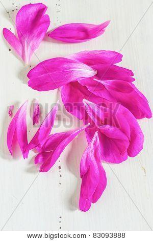 Loose petals of a fragrant pink peony.
