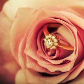 image of diamond ring  - gold diamond engagement ring in beautiful rose flower macro view - JPG