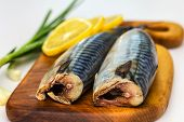 stock photo of saltwater fish  - Mackerel Fish  - JPG
