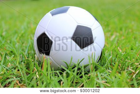 Small Stress Ball Lying On The Green Grass
