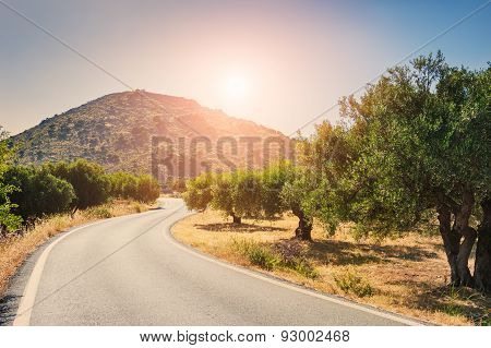 Road Between The Mountains And Groves Of Olive Trees