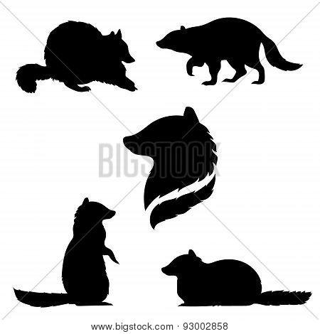 Raccoon set vector