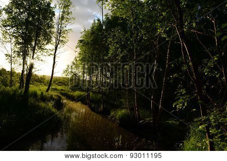 Early Summer Morning On The Forest River In The Deciduous Forest With Peat Water