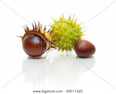 Fruit Chestnut Closeup On A White Background With Reflection
