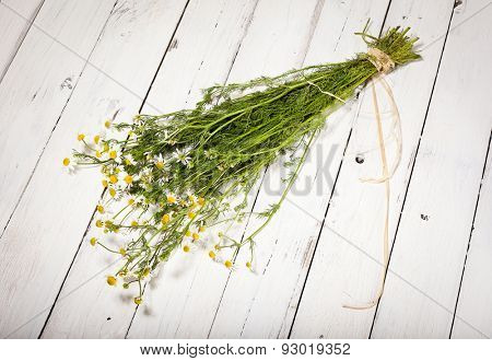Bundled chamomile twigs on rustic wooden white background