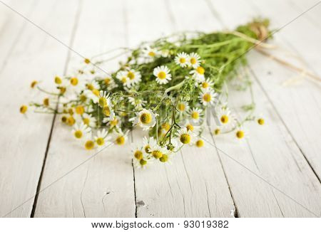 Bundled chamomile twigs on rustic wooden white background, selective focus