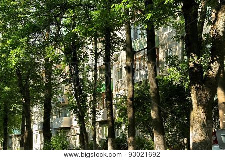 Urban Jungle: Windows Of Residential House, Blocked By Trunks Of Tall Trees