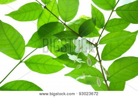 Spring blossom background - green leaves and white flowers