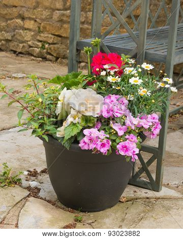 Colorful Plants In A  Pot, Including Begonia, Petunia, Fuchsia, Impatiens, Pelagonium