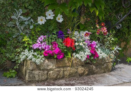 Colorful Plants In Stone Trough, Including Begonia, Petunia, Fuchsia.