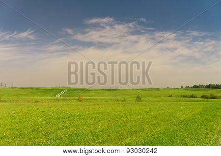 Vibrant Nature Field Landscape