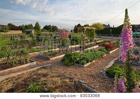Community Allotment Garden